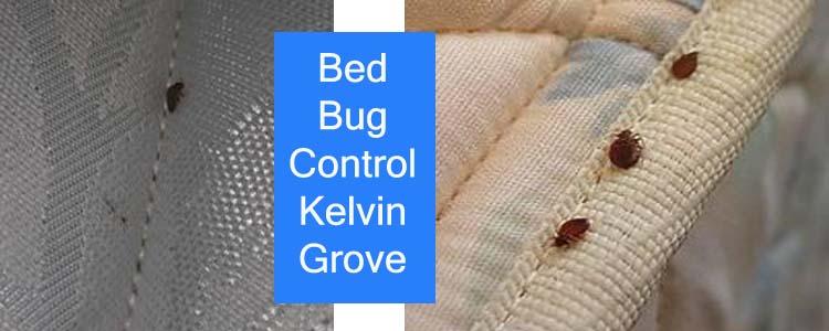 Bed Bug Control Kelvin Grove
